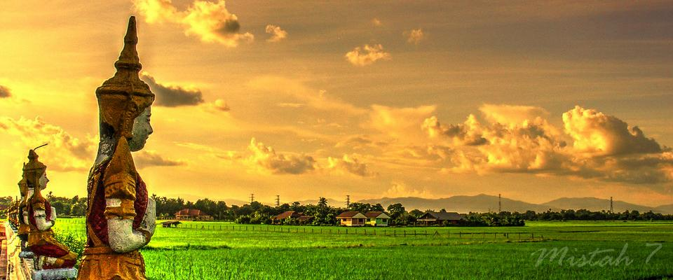 View over ricefield in sunset