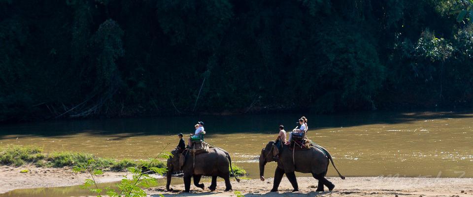 Elephants walking beside Mae Nam Kok